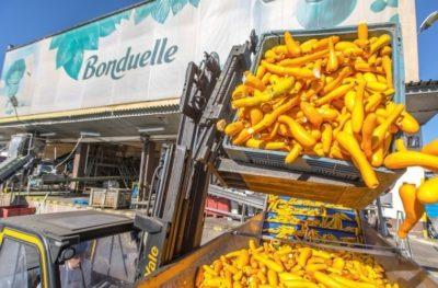 Wózki widłowe Yale w fabryce warzyw Bonduelle